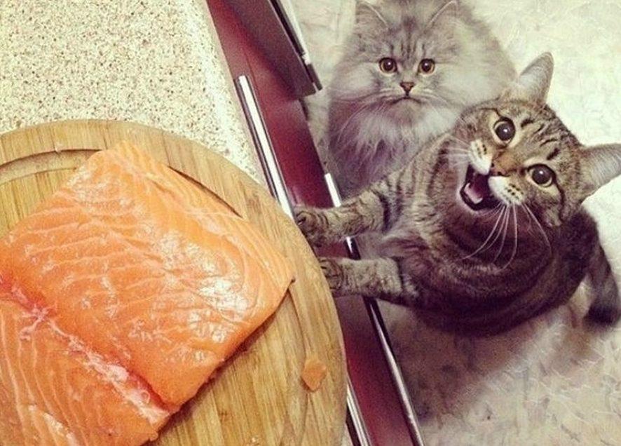 Они от голода не умрут! 3 самых смешных видео о котах, у которых особые отношения с едой