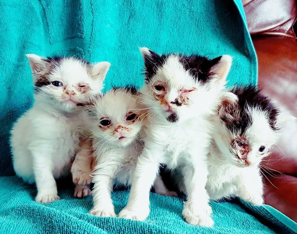 картинки где котята маленькие