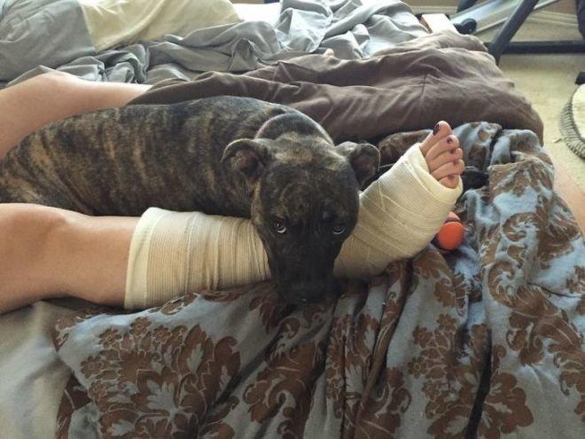 Я буду охранять твою сломанную ногу. животные, собаки, это интересно