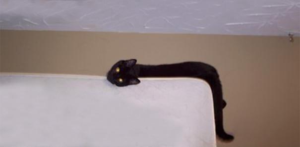 Кот, растекшийся по дивану, похож на сон Сальвадора Дали животные, расслабленность, смешно, фото