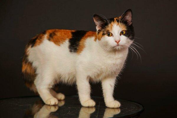 Серьезная кошка: «Попрошу уважать меня как личность!» не всё так грустно