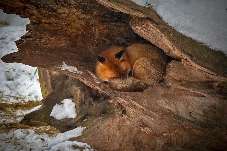 своих картинки спящих животных зимой сделало