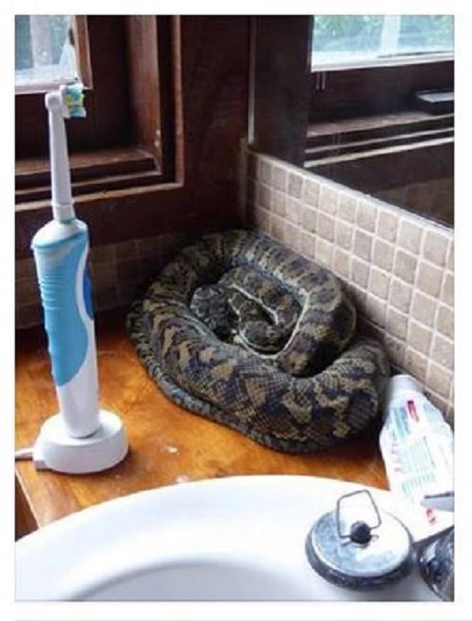 Всегда напомнит почистить зубы! австралия, змея
