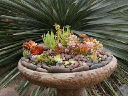 Красивые садовые композиции …
