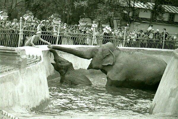 Слоны в Московском зоопарке. Архивное фото.
