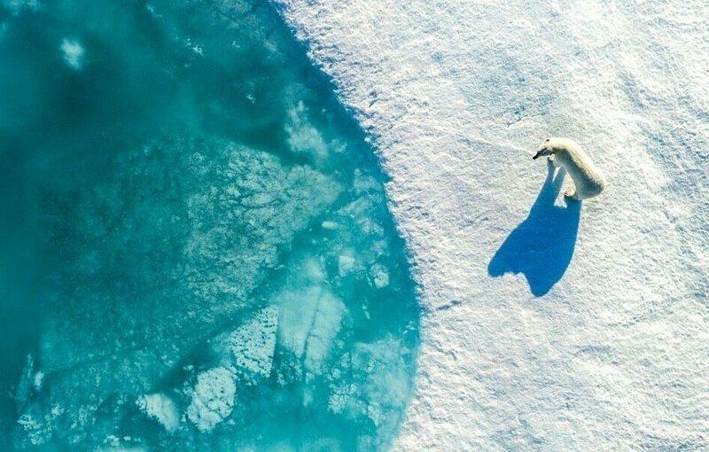 Обитатель снежной пустыни дрон-фотография, дроны, итоги фотоконкурса, красиво, необычно, фото, фотографии, фотоконкурс