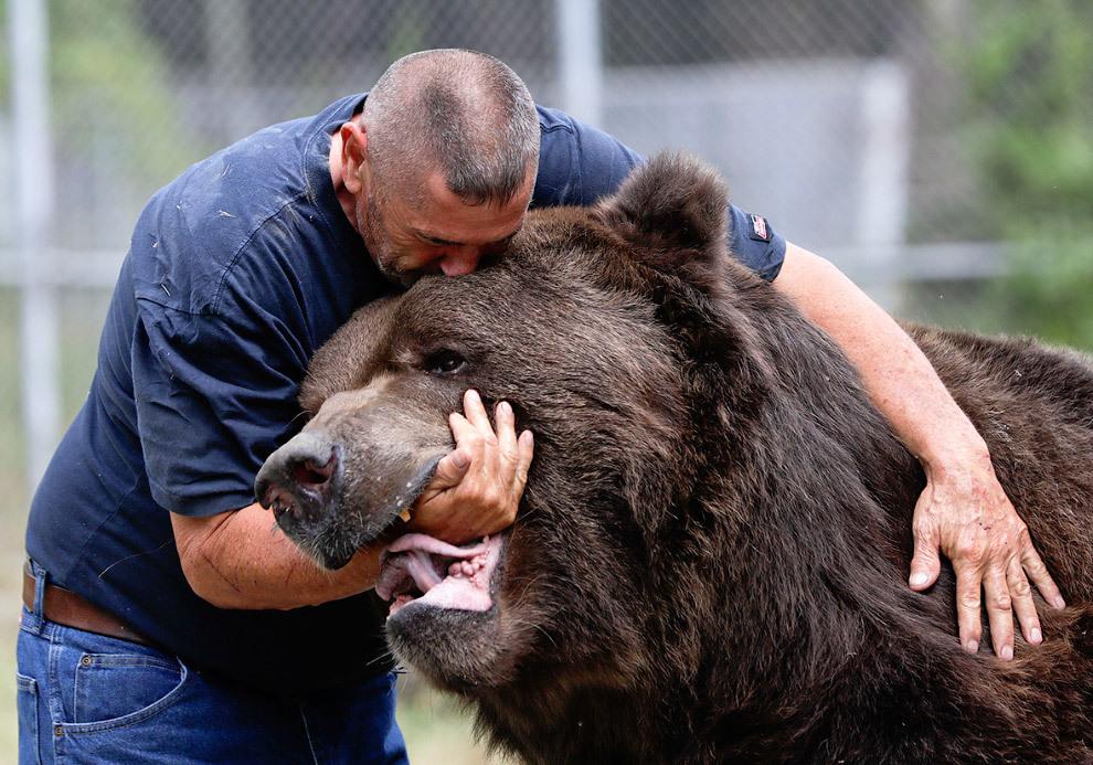 изделия гризли медведь фото с человеком прекрасное место