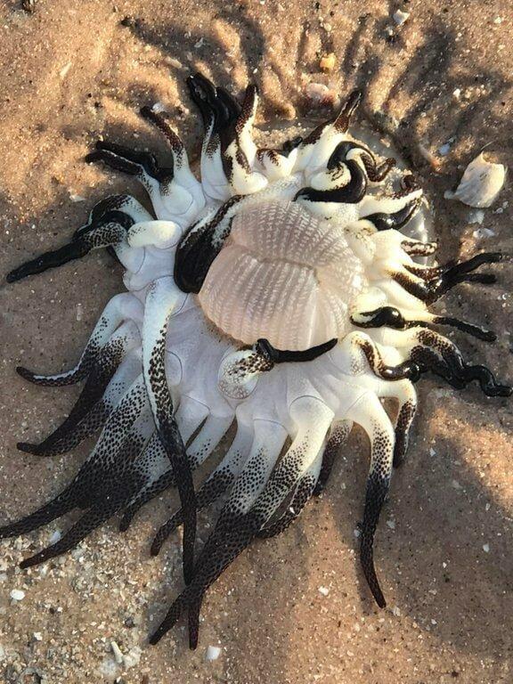 3. «Мама с девушкой нашли это на берегу. Есть какие-нибудь идеи?» в мире, вещи, интересно, познавательно, удивительно, фото
