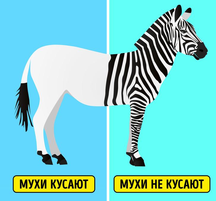 10 особенностей животных, которые казались нам ошибками эволюции (На самом деле все наоборот)