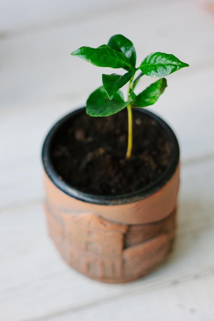 Список благоухающих растений для квартиры
