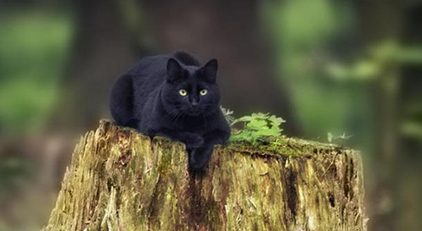 Кошки и мистика