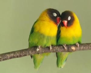 10 животных, создающих пары на всю жизнь