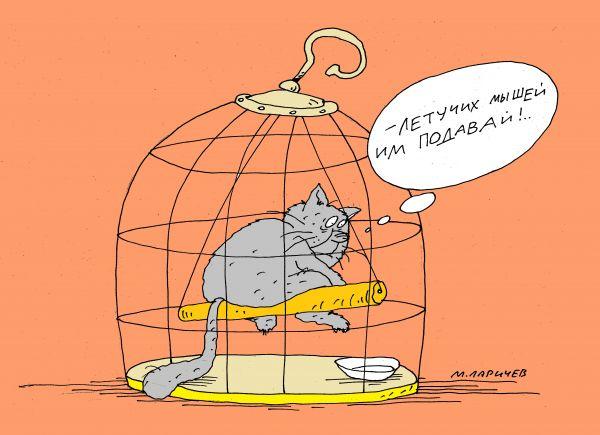 Без кошек жить нельзя на свете, нет! животные, позитив, смешные животные, юмор