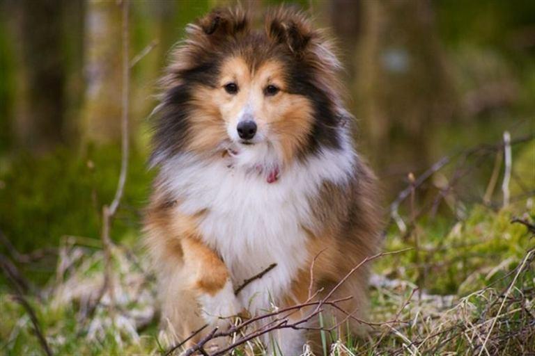 Самые добрые породы собак домашние животные