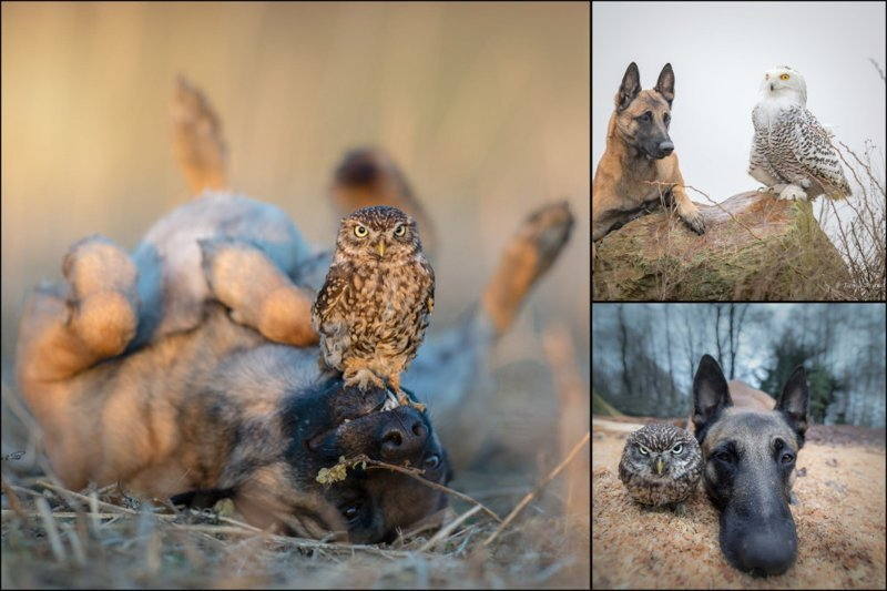 Жизнь и приключения овчарки Инго и ее лучших друзей — сов