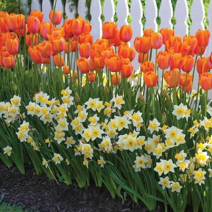 какие цветы садить весной фото и название можно