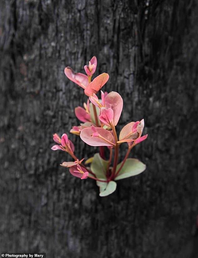 Зелёные побеги надежды: как в Австралии оживают первые цветы и кусты Австралия,жизнь,катастрофы,природа