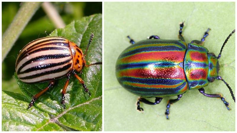 действительно большие цветные картинки жуков фотосессии