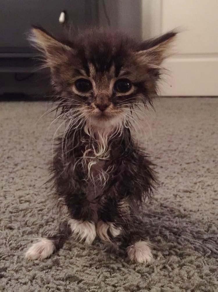 Крошечная кошечка родилась без локтевых суставов и была отдана в приют! Но взгляните на нее сейчас