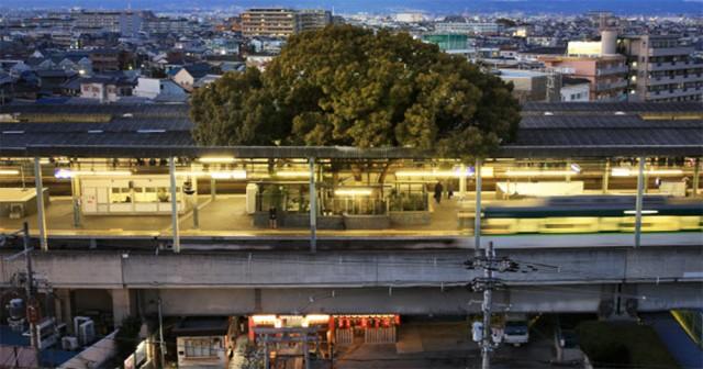 Японский железнодорожный вокзал построен вокруг 700-летнего дерева