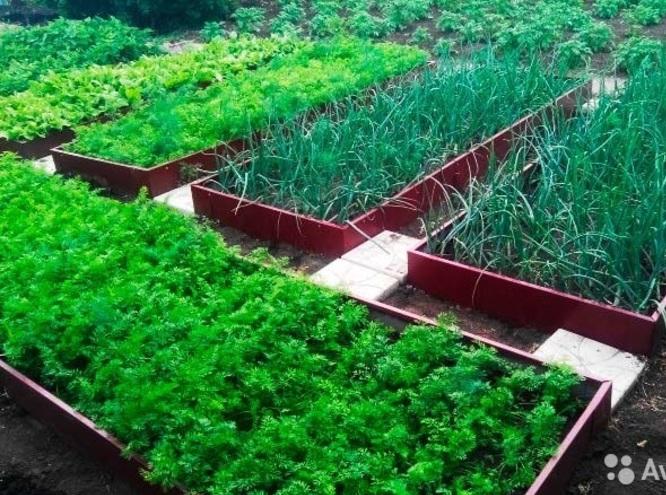 Что посадить в огороде в июле. Пеларгония - когда и как делать обрезку