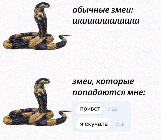 Картинки про змею с надписями, надписями
