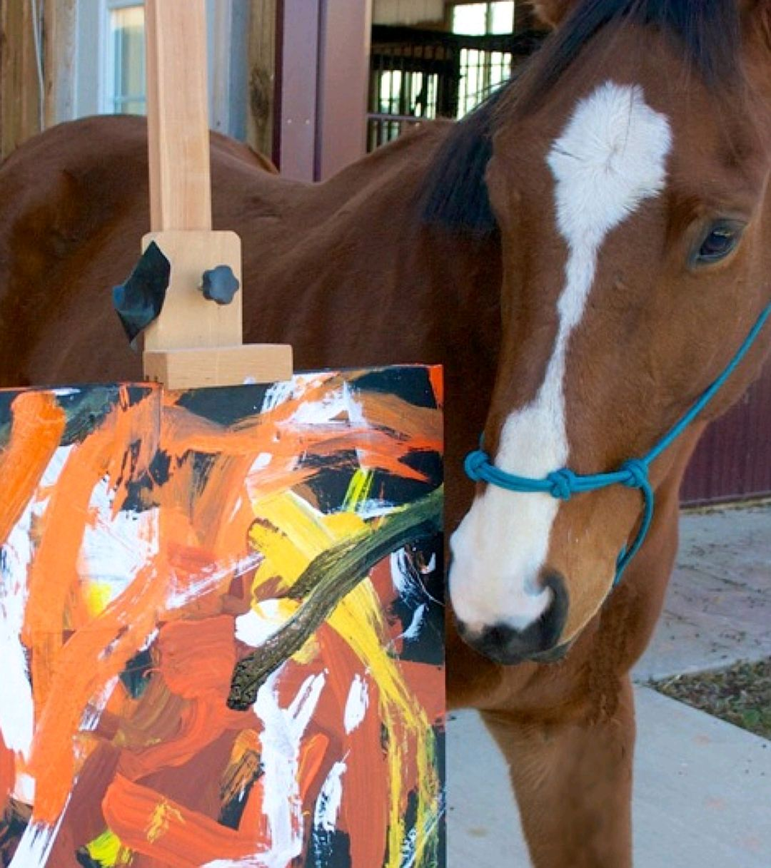 Жеребец по прозвищу Метро Метеор принадлежит к породе чистокровных верховых лошадей. ФОТО paintedbymetro.com