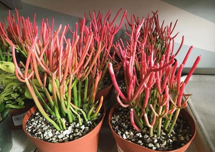 15 необычных и очень красивых растений для тех, у кого ″есть все″ комнатные растения