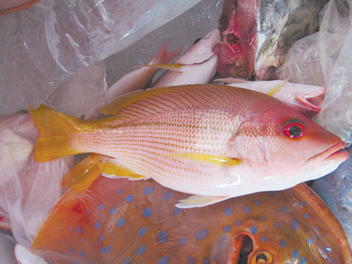 И зимой бывает лето, или Рыбалка по-тайски
