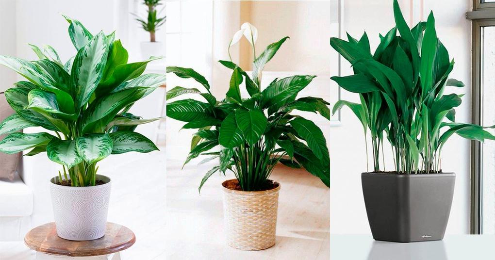 10 комнатных растений, которые вырастут даже в самом темном углу