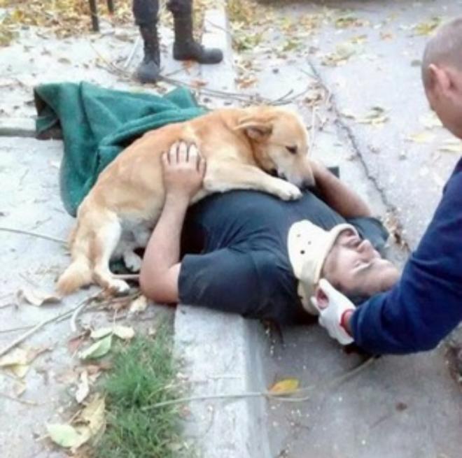 Щенка просто не могли забрать от хозяина, который упал с дерева, обрезая ветки. животные, собаки, это интересно