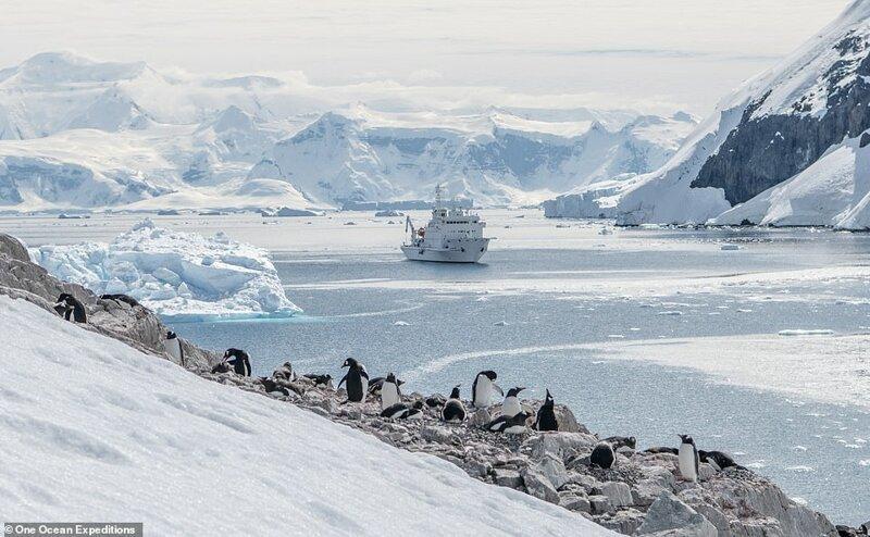 20. Компания One Ocean Expeditions специализируется на приключениях и наблюдении за дикой природой в полярных регионах. Ниже - один из типично небольших лайнеров подплывает к колонии пингвинов в Антарктиде красиво, красивые места, круиз, круизы, мир, паром, путешествия, фото