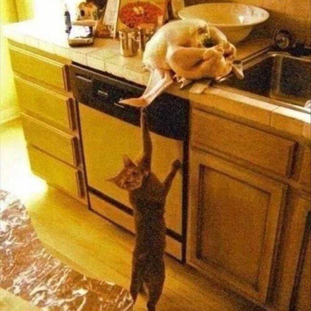 Котики и собаки, которые были пойманы с поличным животные,юмор и курьезы