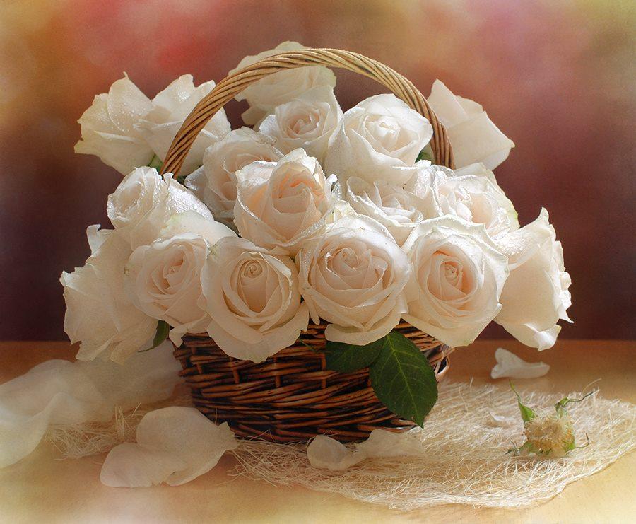 Поздравления с днем рождения белыми розами в картинках, летием прикольное