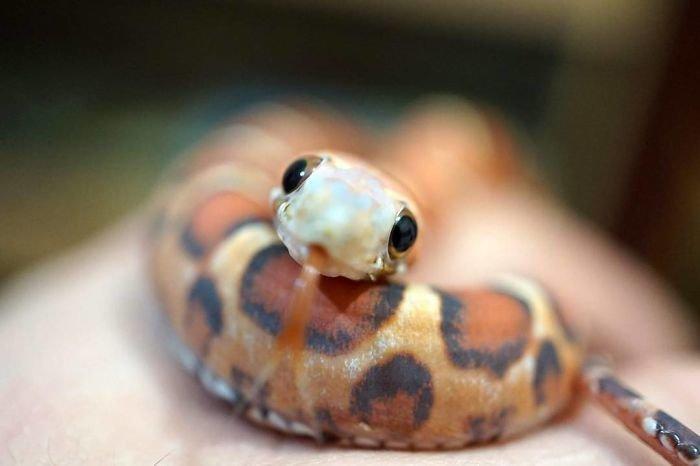 35 восхитительных фотографий, которые помогут вам побороть страх перед змеями