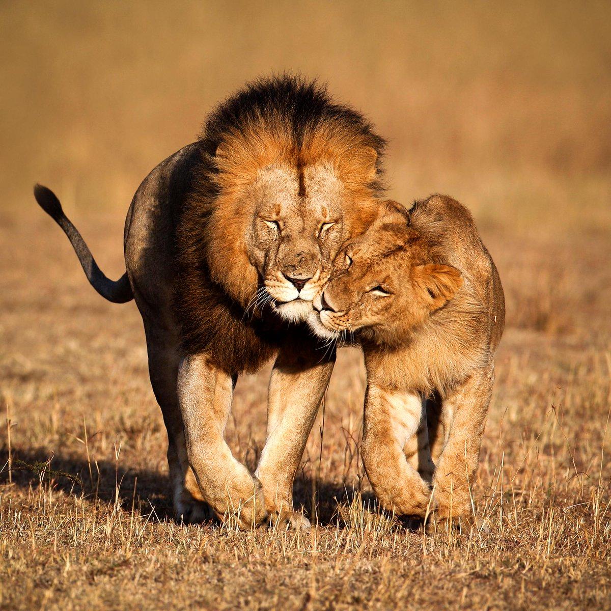 Прикольные картинки о любви и нежности с животными