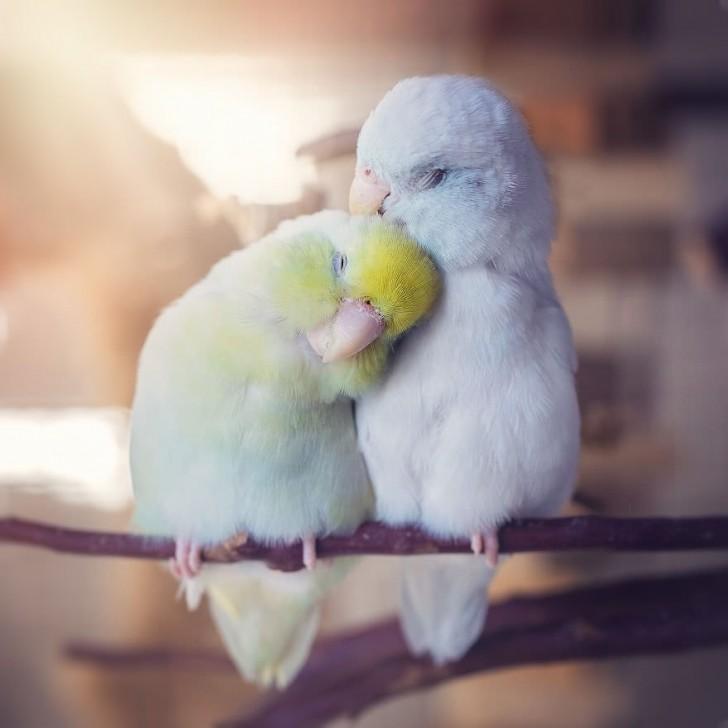 Любимых надо обнимать и по вечерам и по утрам. И вот этому доказательства