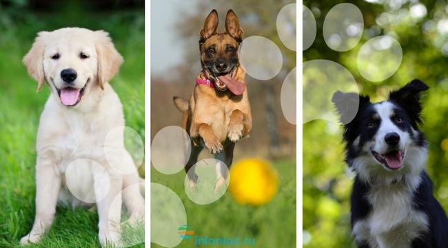 15 самых добрых пород собак …