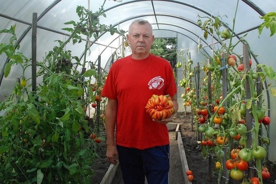 материал картинки день томатов перестаёшь ждать