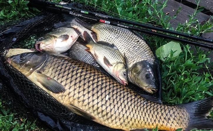 Диалоги о рыбалки карп
