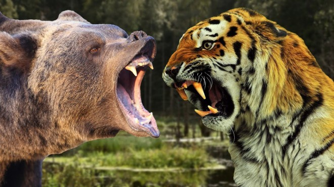 Медведь: царь зверей, который сильнее льва и тигра