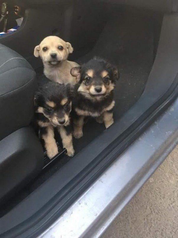 Очаровательные щенки на трассе