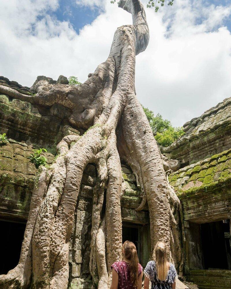 У этого дерева поразительно сильные корни катаклизмы, природа, растительность