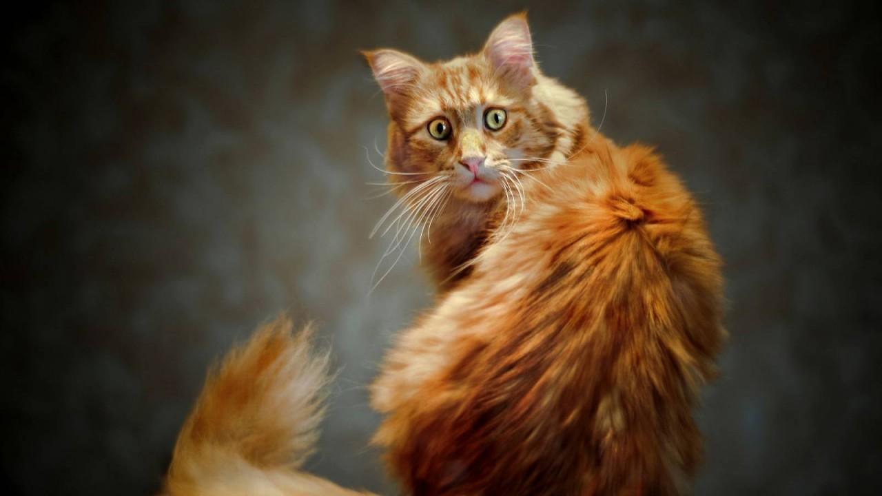 Что такое кошачья ксенофобия…