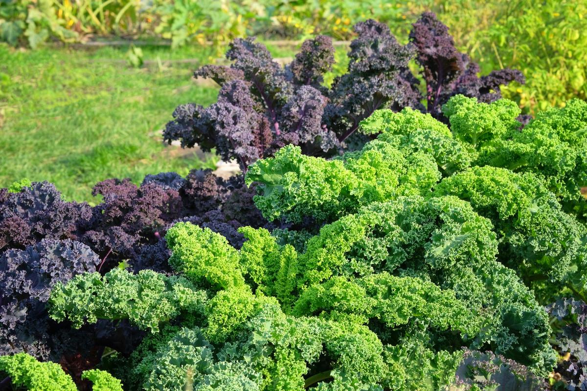 Что посеять в июле в огороде? дача,сад и огород,советы огородникам