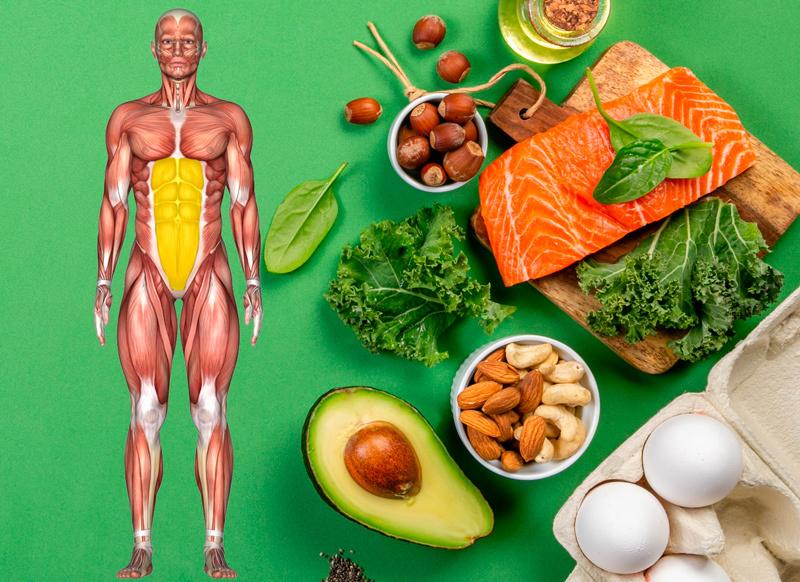 Циклическое потребление белка: как подвинуть болезни и старость