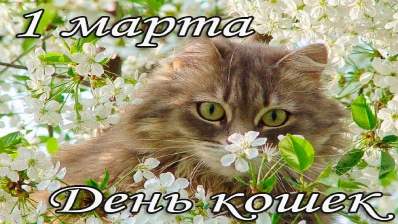 Поздравляем с Днем котов и кошек! (интересные факты)
