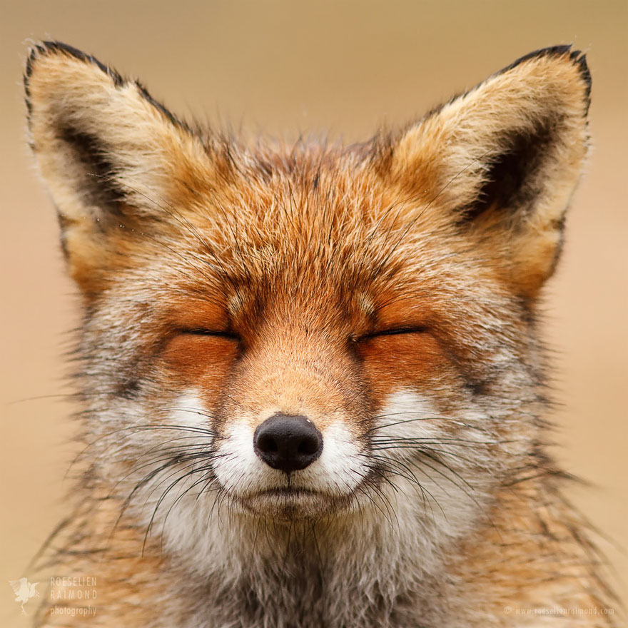 fox-faces-roeselien-raimond-smiling