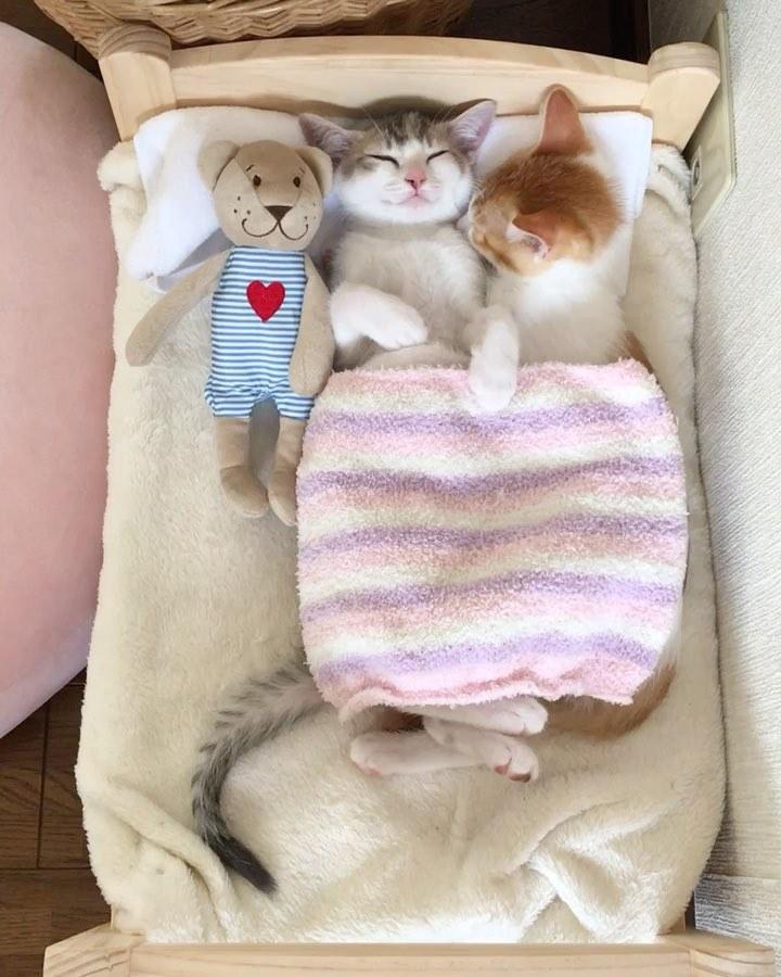 Доброго, картинки кошки спят в кроватках
