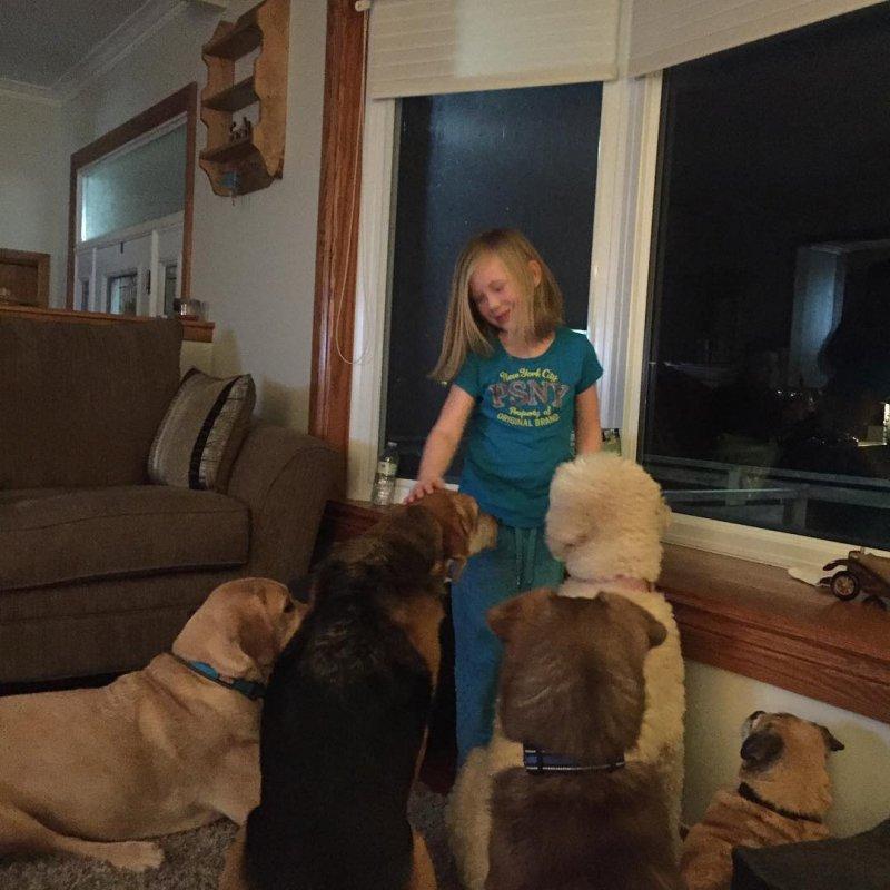 11. Когда целая банда слушает животные, животные и дети, кошки, питомцы, собаки, фото